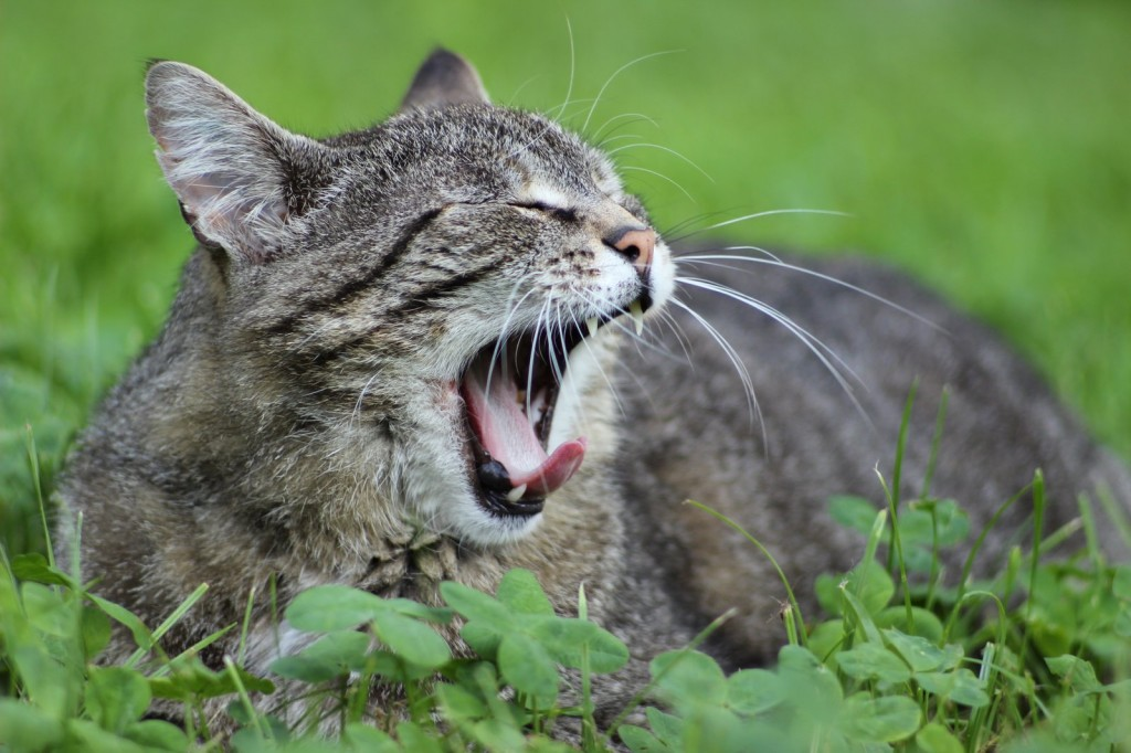 Müde Nachbars Katze