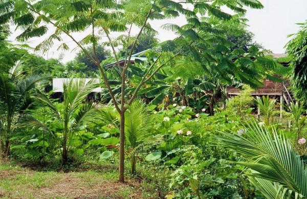 Lotus Garten